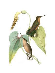 Delicate Hummingbird II by Vision Studio