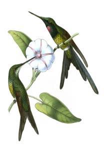 Delicate Hummingbird III by Vision Studio