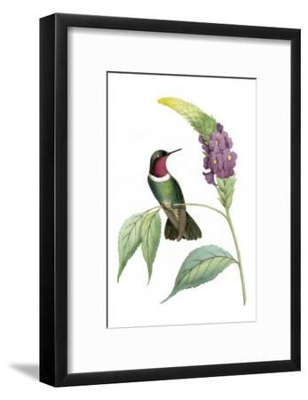 Delicate Hummingbird IV