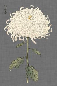 Dramatic Ivory Mums II by Vision Studio