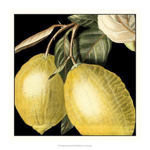 Dramatic Lemon by Vision Studio