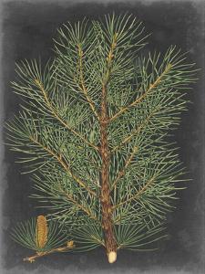 Dramatic Pine II by Vision Studio