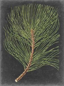 Dramatic Pine III by Vision Studio