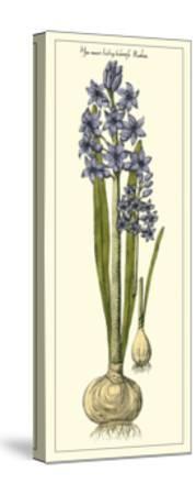 Embellished Hyacinth II