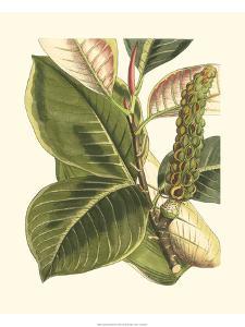 Fantastical Botanical IV by Vision Studio