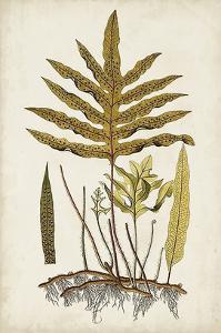 Fern Botanical I by Vision Studio