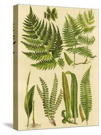 Fern Collection I by Vision Studio