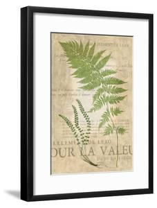 Fern Folio II by Vision Studio