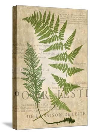 Fern Folio IV