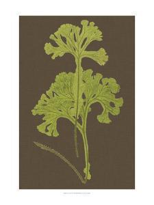 Ferns on Linen II by Vision Studio