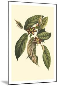 Flourishing Foliage IV by Vision Studio