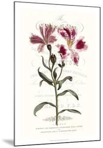 Flower Garden Varietals II by Vision Studio