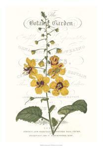 Flower Garden Varietals V by Vision Studio