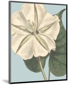Fresh Florals IV by Vision Studio
