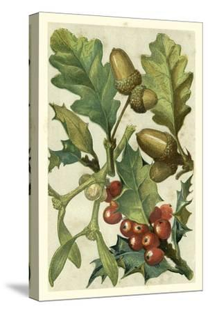 Fruits and Foliage II
