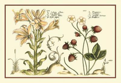 Garden Botanica I