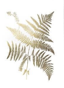 Gold Foil Ferns I by Vision Studio