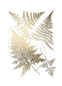 Gold Foil Ferns III by Vision Studio