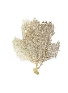 Gold Foil Sea Fan II by Vision Studio