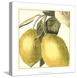 Graphic Lemon by Vision Studio