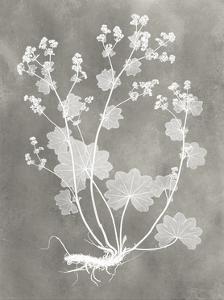 Herbarium Study I by Vision Studio