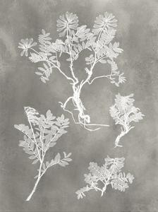 Herbarium Study II by Vision Studio