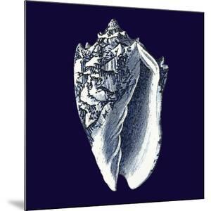 Indigo Shells II by Vision Studio
