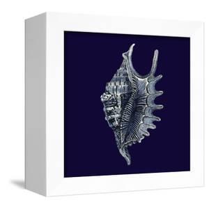 Indigo Shells VI by Vision Studio