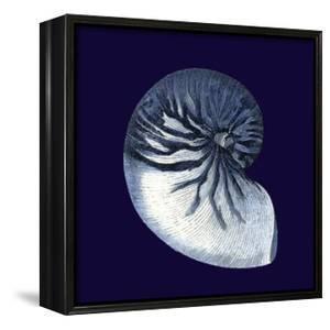 Indigo Shells VII by Vision Studio
