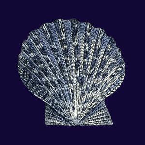 Indigo Shells VIII by Vision Studio