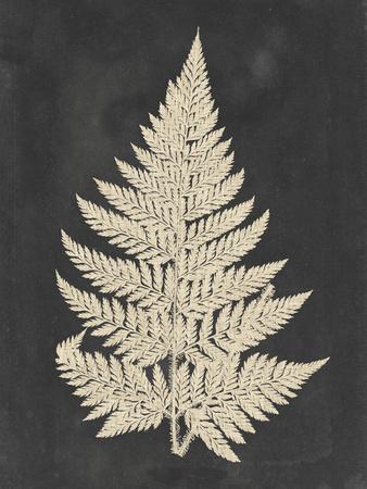 Linen Fern I
