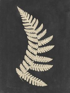 Linen Fern IV by Vision Studio