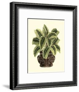 Lush Foliage in Urn I by Vision Studio