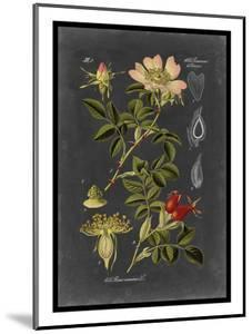 Midnight Botanical I by Vision Studio