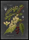 Sepia Ferns VI-Vision Studio-Art Print