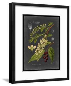 Midnight Botanical II by Vision Studio