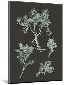 Mint & Charcoal Nature Study II by Vision Studio