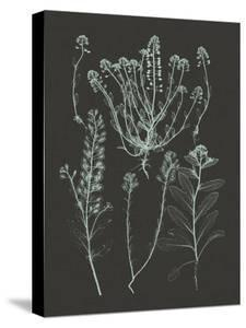 Mint & Charcoal Nature Study III by Vision Studio