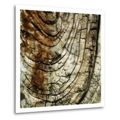 Nature's Textures III