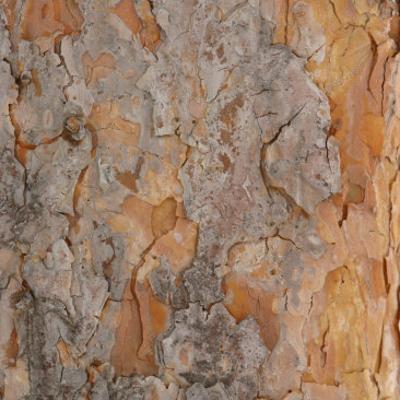 Nature's Textures VII