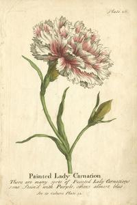 Non-Embellished Vintage Carnation by Vision Studio