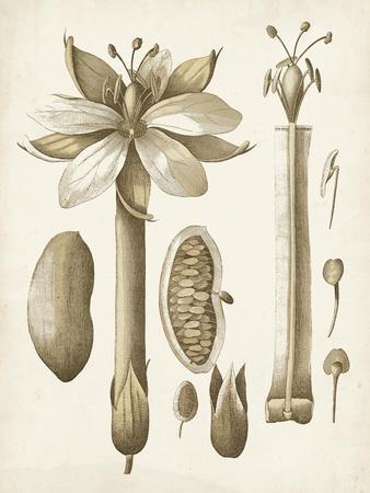 Ochre Botanical I