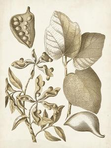 Ochre Botanical III by Vision Studio