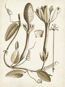 Ochre Botanical IV by Vision Studio