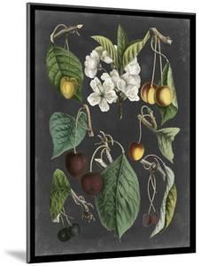 Orchard Varieties II by Vision Studio
