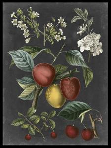 Orchard Varieties III by Vision Studio