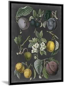 Orchard Varieties IV by Vision Studio