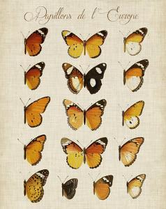 Papillons de L'Europe II by Vision Studio