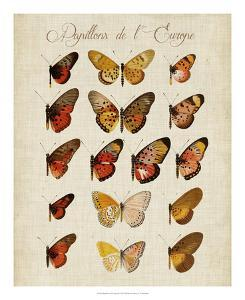 Papillons de L'Europe III by Vision Studio