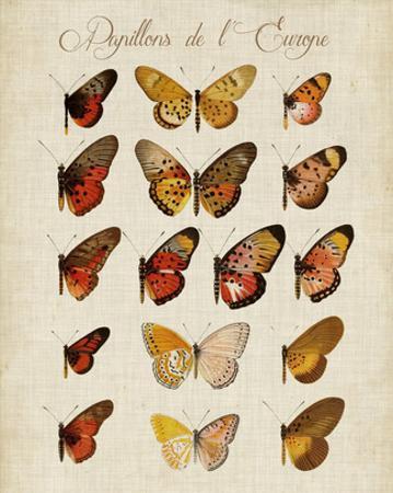 Papillons de L'Europe III
